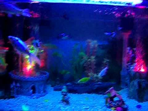 Cold Water Tropical Fish Tank Setup Youtube