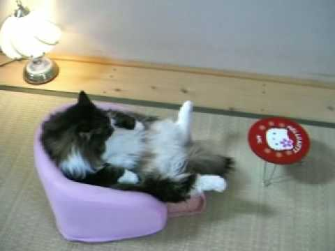 best cat food for older cats with sensitive stomachs