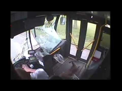 Bus Deer Incident - Bus Deer Incident