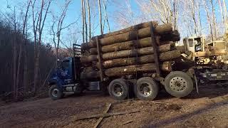 Southern WV Logging