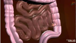 Working of Digestive System