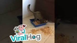 Litter Box Mess || ViralHog