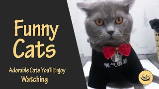 Funny Cats Adorable cats you'll enjoy watching ♥♥ (New Videos)