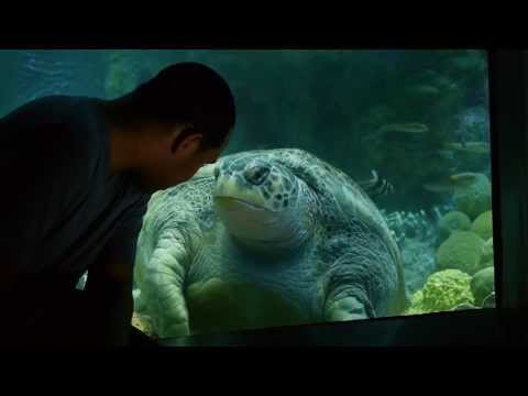 Sea Turtles - A Temperature Tale