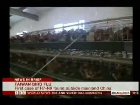 Taiwan watching travelers after H7N9 bird flu case