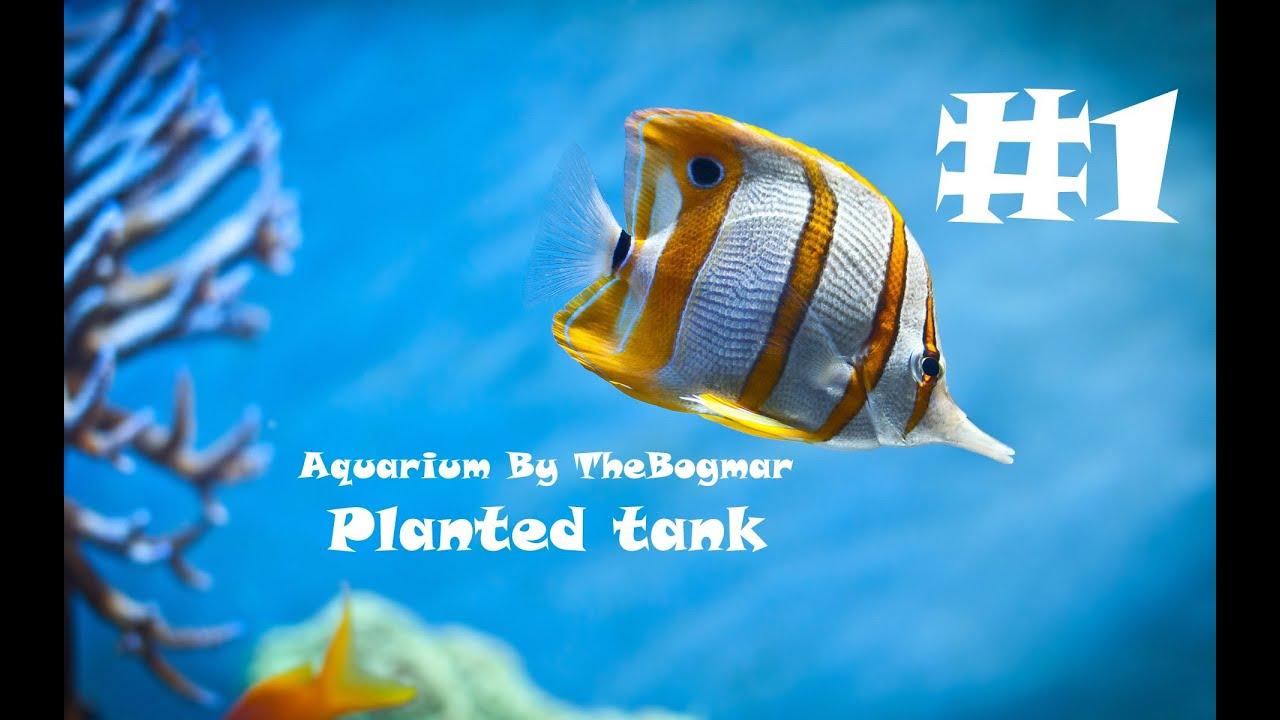 Aquarium of 60 litres youtube for Decoration aquarium 60 litres