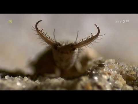 Маленькие но значительные: Насекомые / Little Matters: Insects