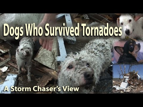 Miracle Dogs Survive Deadly Tornadoes