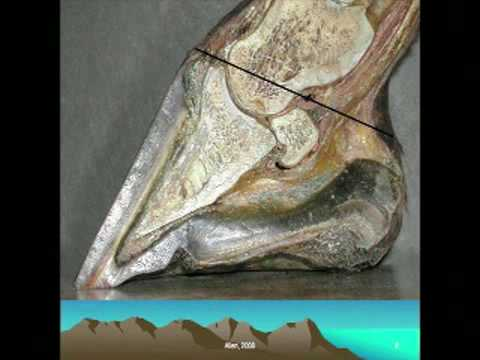 Anatomy of the Horse's Hoof, part one, provided by eXtension