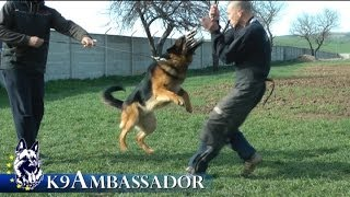 REX - Personal Protection Dog / K9 Ambassador
