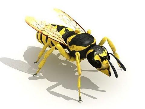 Пчела или оса своими руками