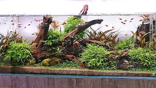 10 Stunning Aquascapes - What's your favourite?