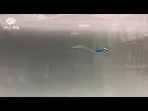 [最新!] プランクトン水中の動き