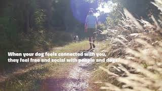Dog In Neutral - Relationship & Connection