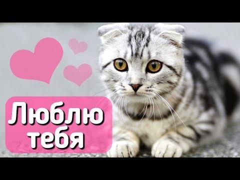10 признаков, что кошка вас любит! С веселым котом #Джемом 🐈