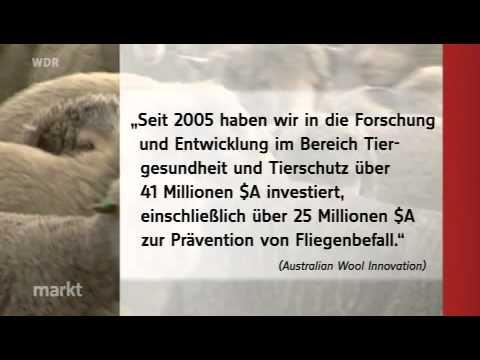 Tierschutz in der Wollproduktion - WDR Scanner vom 09.01.2012