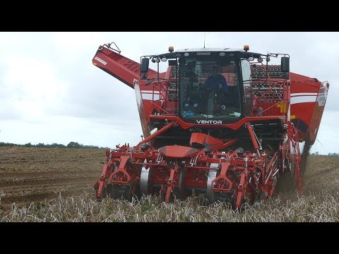 Grimme Ventor 4150 Working Hard in The Field Harvesting Potatoes | BIG Harvester | DK Agriculture