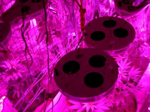 LED grow lights, 90 watt UFO,medical Marijuana ,High pressure sodium,indoors growing,howto