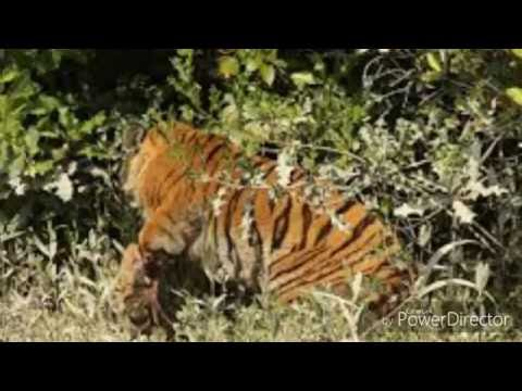 Bangladesh wildlife|most beautiful animals life in south Asia