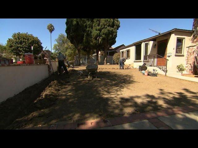 California sod businesses struggle in drought