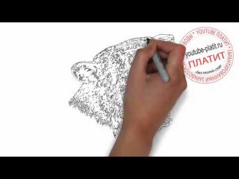 Видео как нарисовать пантеру карандашом поэтапно