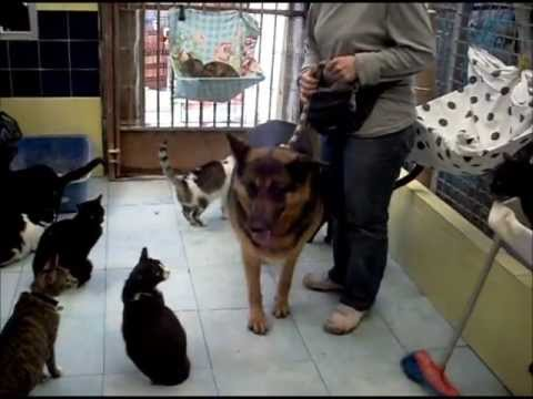 Animalinneed: Video of Angel