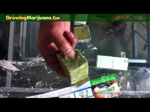 Growing Weed - Benefits of Using Rockwool For Growing Marijuana
