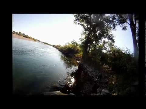 shad fishing yuba river 6-17-12