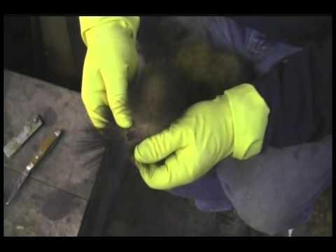 Marten/Fisher Combo 5x5/155 Set and Fur Handling by Bob Noonan