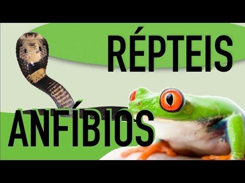 Zoologia - Cordados: Anfíbios e Répteis