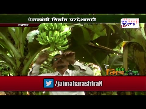 Sheti Mitra: Banana export to foreign country