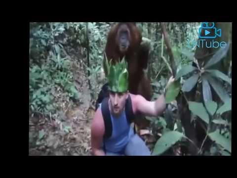 هجمات الحيوانات البرية رقم 17 - القرد يهاجم الناس - فيديو مضحك القرود تهاجم الفتيات