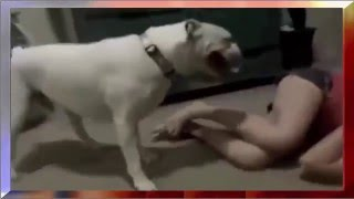 Top Animals Mating - Funny Animals - Girl Mating With Dog