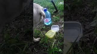 Гадюка укусила собаку последствия прикол 2018