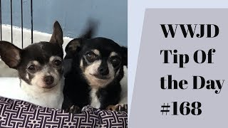 Question to ask a trainer. What Would Jeff Do? Dog Training Tip of the Day #168