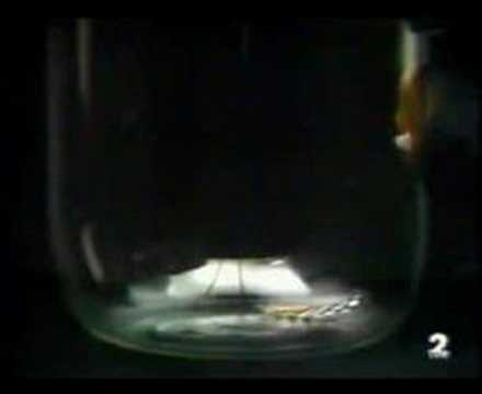 Física - Video 01 - Caída libre en el vacío: demostración