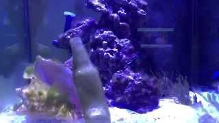 KP Aquatics Aquacultured Live Rock review