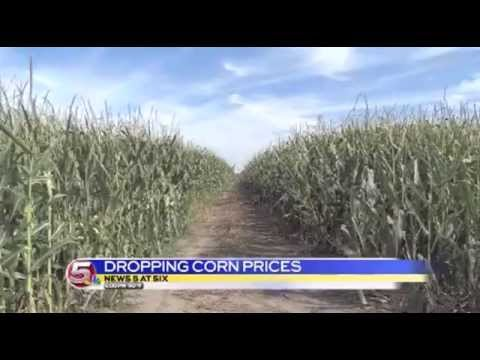 News 5 at 6 -  Farmers On Edge As Corn Prices Plummet / August 4, 2014