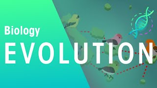 Evolution by Natural Selection - Darwin's Finches | Biology for All | FuseSchool