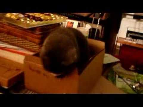 Minos, le poinçonneur de carton