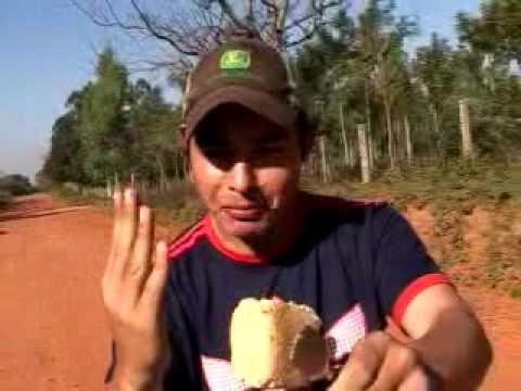 El chipero travalengua de Paraguay