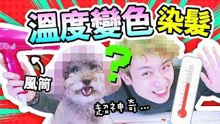 淘寶開箱:【超神奇】頭髮會「隨溫度變色」?和狗狗一起染髮!
