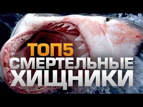 ТОП5 Смертельных ХИЩНИКОВ