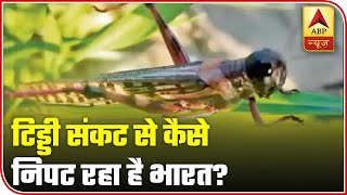 Locust Attack From Pakistan: Watch How India Is Dealing With The Problem | ABP News