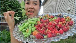 Hái dâu tây, ăn việt quất ,ăn mâm xôi đỏ,ăn đậu hà lan,táo đỏ,