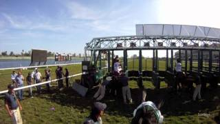 Rajiv Maragh Jockey Cam at Gulfstream Park in HD: Ride the Race with EquiSight