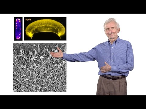 Thomas Pollard (Yale University) 2: Mechanism of cell motility pt. 2