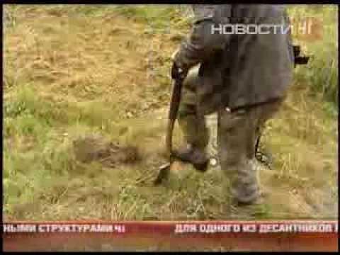 Новый закон о «черных копателях» грозит тюрьмой садоводам