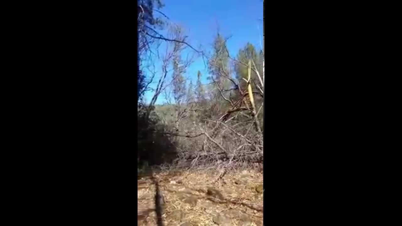 Wind Shear Wind Shear Damage in Mountains