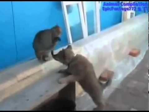 животные лучшие приколы animal funny video